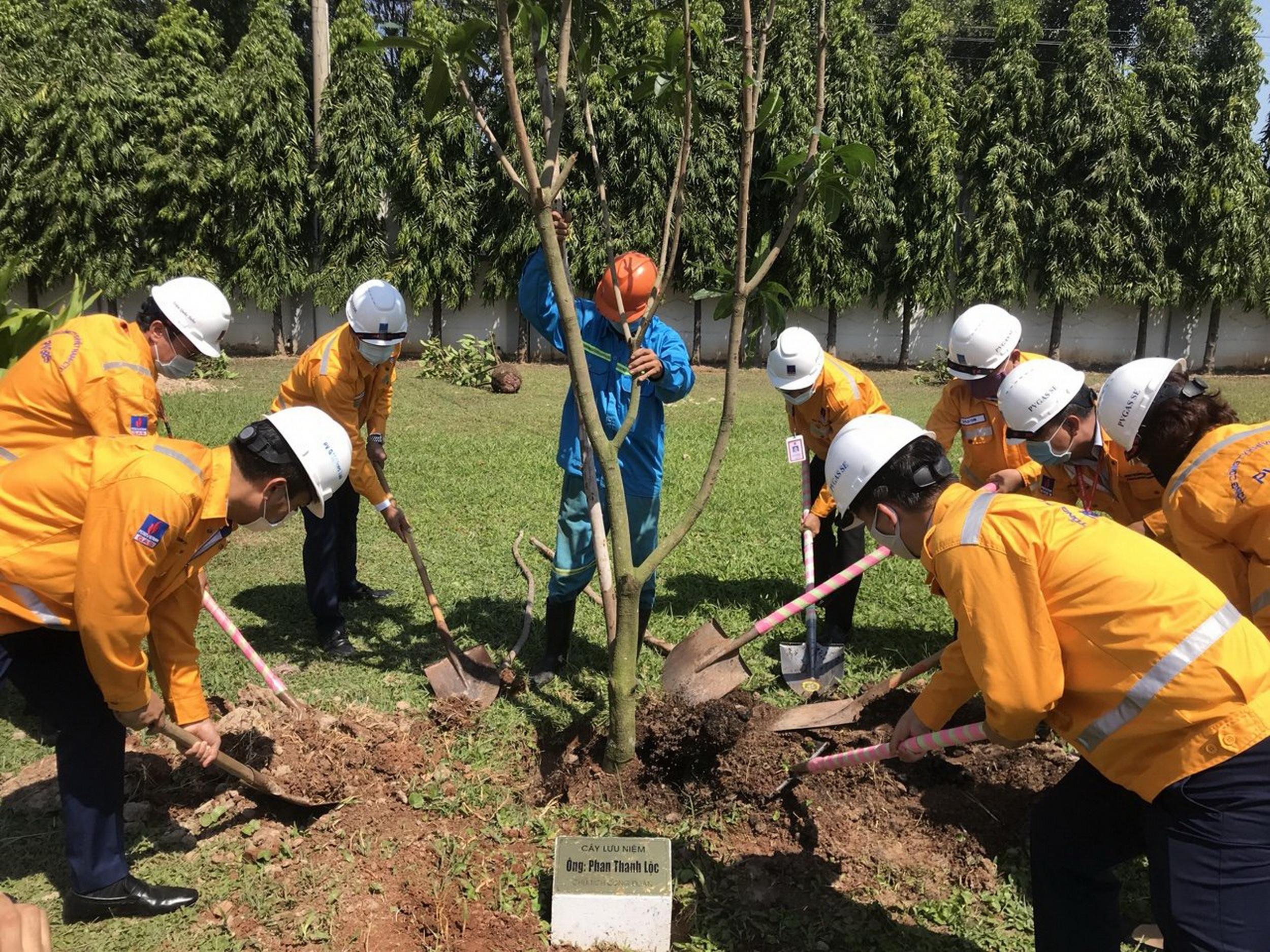 Tổ chức trồng cây làm xanh công trình, bảo vệ cảnh quan môi trường